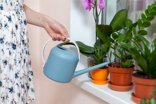 Замиокулькас в домашних условиях – как вырастить долларовое дерево