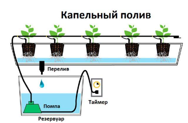 Оборудование для выращивания овощей гидропоникой: разновидности, особенности