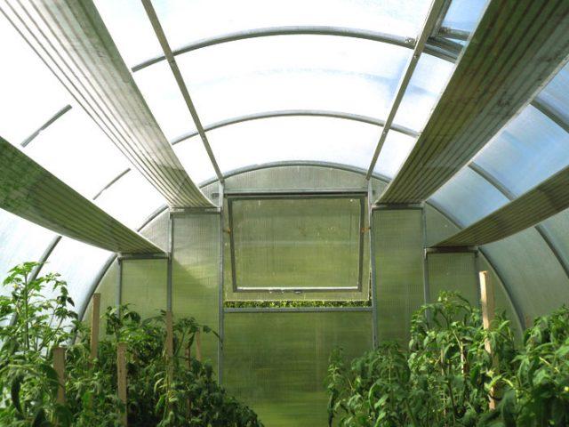 Обустройство теплицы: приёмы и хитрости планировки внутри строения