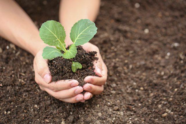 Как защитить рассаду в теплице из поликарбоната от весенних заморозков