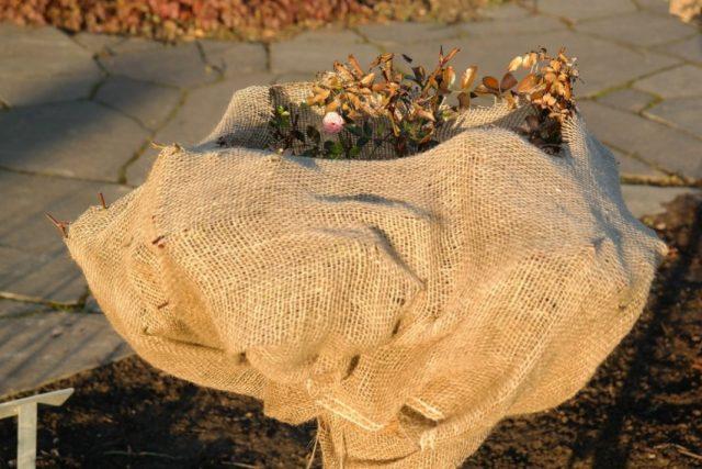 Зоны морозостойкости растений — какие бывают и зачем их знать?