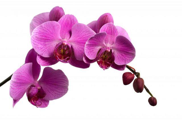 Желтеют листья у орхидеи? Хм. Почему и какие меры надо принять для здоровья растения