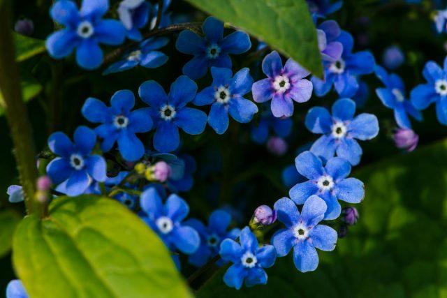 Что посадить в тени: растения для цветников. Фото