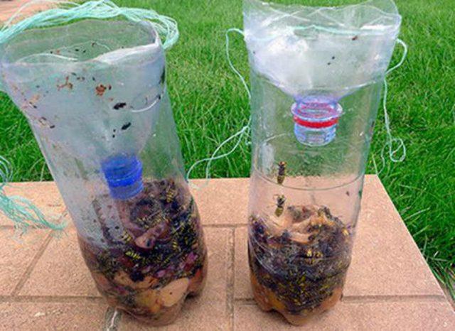 Полезное применение пластиковых бутылок в огороде: 10 способов
