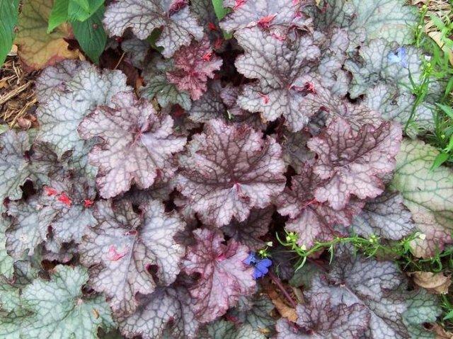 Благоухающий ковёр: Пять лучших многолетников-почвопокровников для клумбы и сада