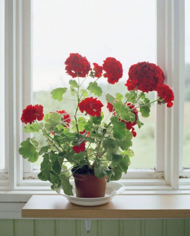 Пять красивых комнатных цветов, по приметам приносящих богатство