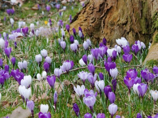 7 красивых цветов для посадки под деревьями
